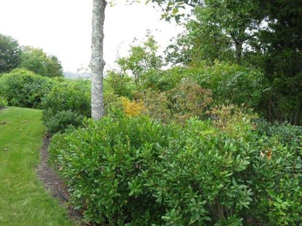 Native And Non Plants In Landscape