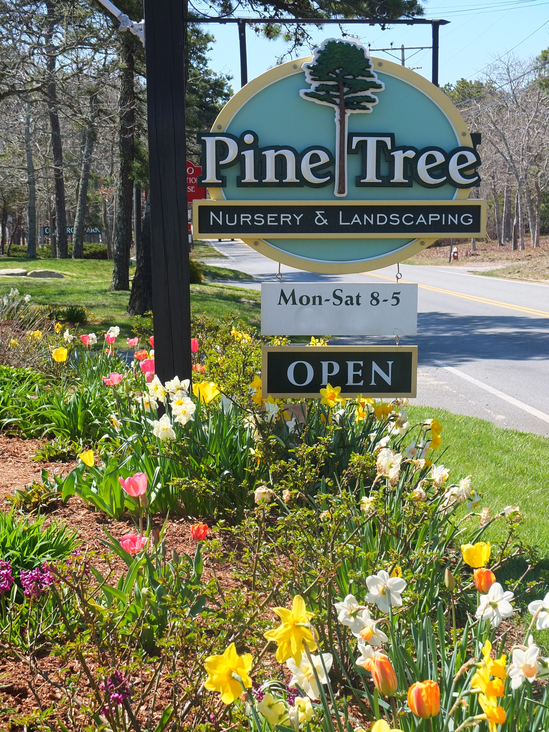 Road Route 137 In South Chatham Pine Tree Still Offers Lower Cape Codders Both A Well Stocked Garden Center And Complete Landscaping Services