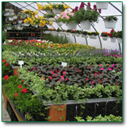 Garden Center And Nursery